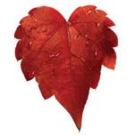 red-leaf-1